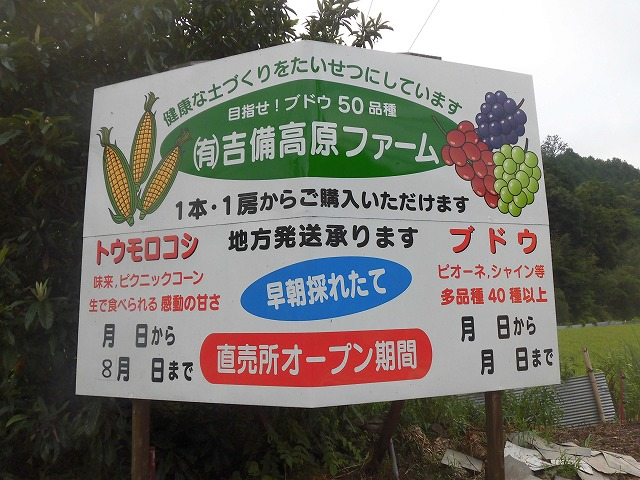 今年のトウモロコシの販売は7月10日頃からです。