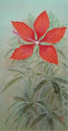 紅蜀葵(縦45センチ)